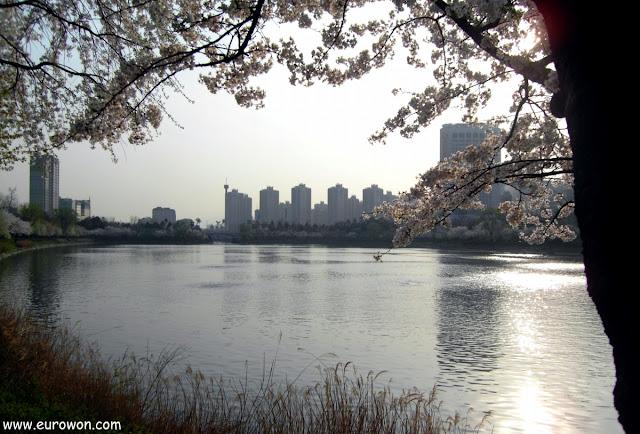 Lago Seokchon en la floración de los cerezos