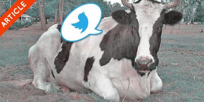 Kalo binatang punya twitter