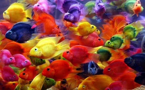 Beatrice testa immagini for Immagini di pesci da stampare