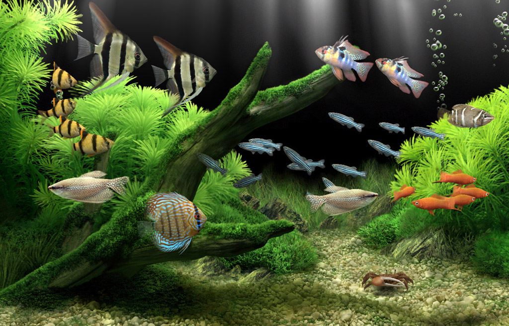 Blogger for wallpaper fish tank background for Fish tank wallpaper