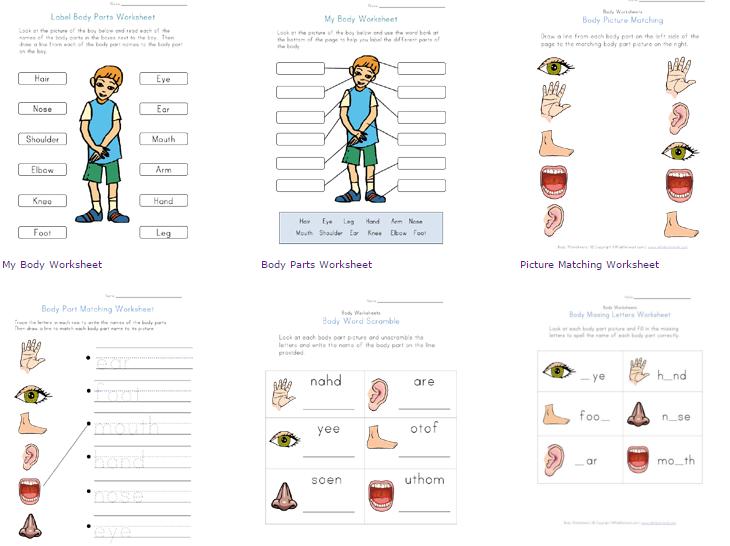 Worksheet Gratis Belajar Bahasa Inggris Tentang Anggota Tubuh Dan Fungsinya Untuk Anak Pendidikan