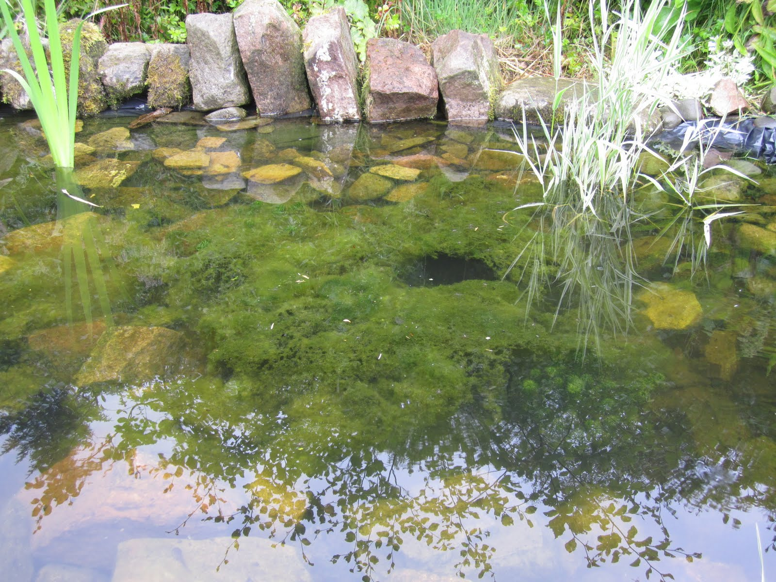 FindFindWeed ControlForFindFindWeed ControlForPonds. Search Faster, Better & Smarter at ZapMeta Now!
