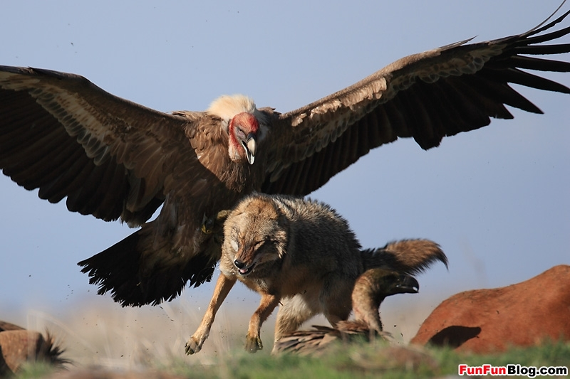 eagle attack -#main