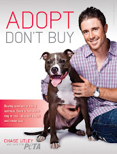 Phillies Second Baseman Chase Utley and His Dog, Jack, Promote Shelter Adoptions