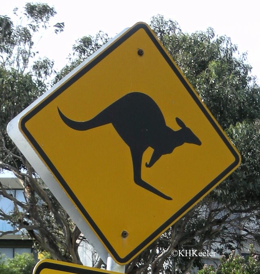 kangaroo crossing, Victoria, Australia