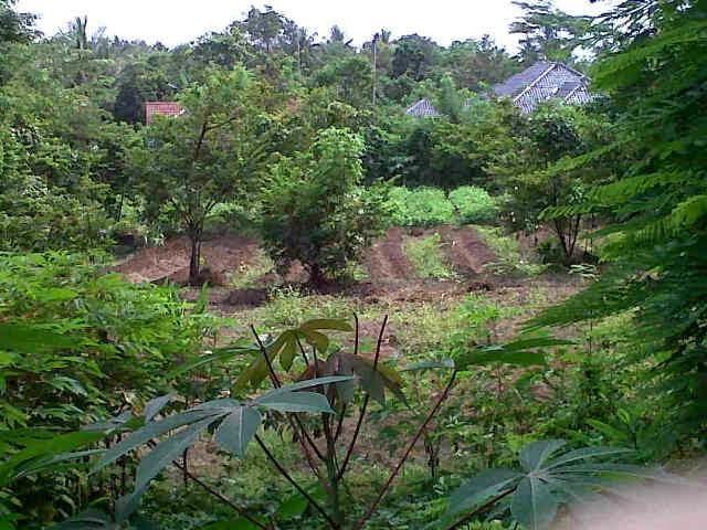 tanah dijual di cirebon mundu