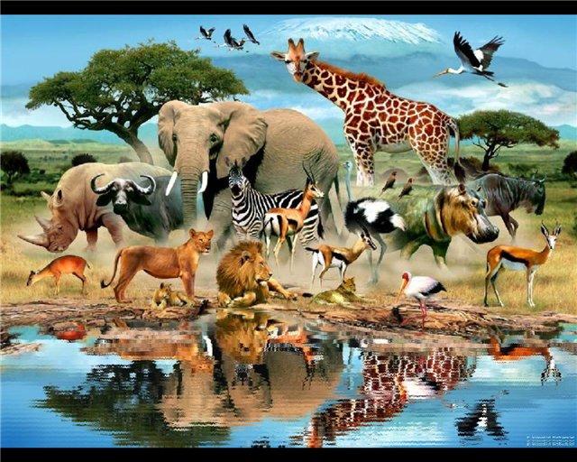 animal hd wallpapers 1080p video