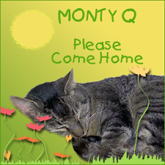 Purring for Monty Q