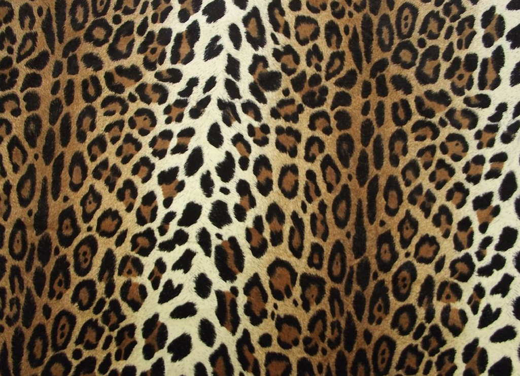 Cheetah print hq wallpapers for Leopard print wallpaper