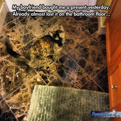funny animals cats pics