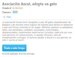 Teaming Gatos Ancat - ayuda con 1€/ mes