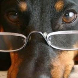 http://1.bp.blogspot.com/-aXo_jVDY1S4/VRRweFSLUwI/AAAAAAAAAVU/YicnFxBnpMk/s1600/dog-glasses.jpg