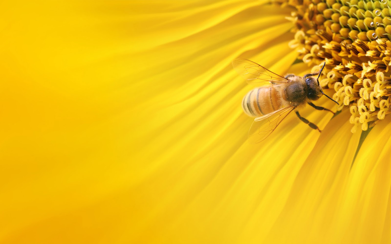 Bee Beautiful Spring Background wallpaper background