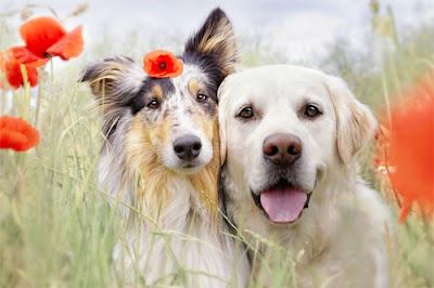 Những chú chó được dạy bảo cẩn thận luôn là người bạn tốt của con người. Ảnh minh họa: News.