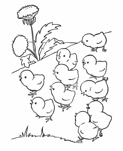 Baby Farm Animals Coloring Pages For Kids gt gt Disney