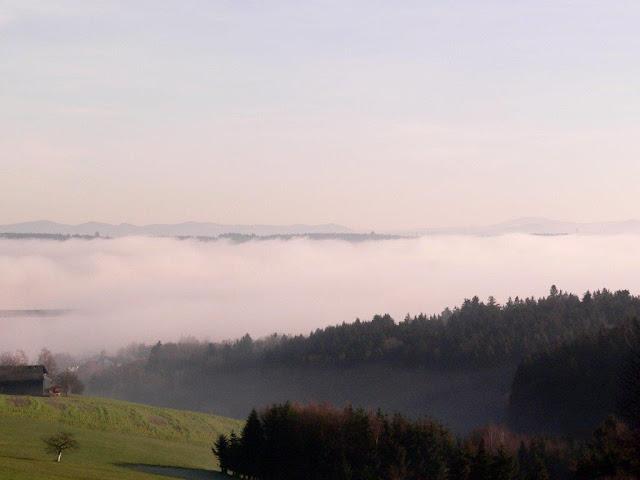 Weihnachten 2015 Natur Hunderunde Bayern Passau Wald Sonne
