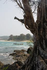 pohon tua