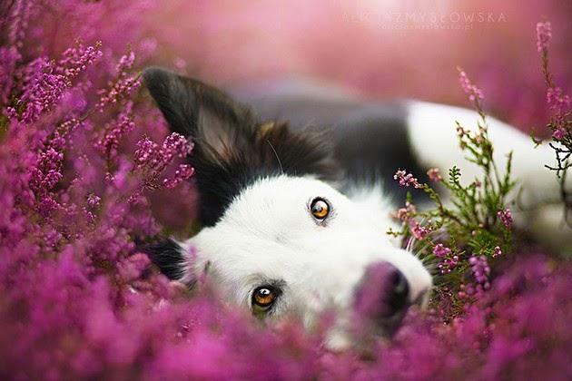 adorable dogs, Alicja Zmyslowska
