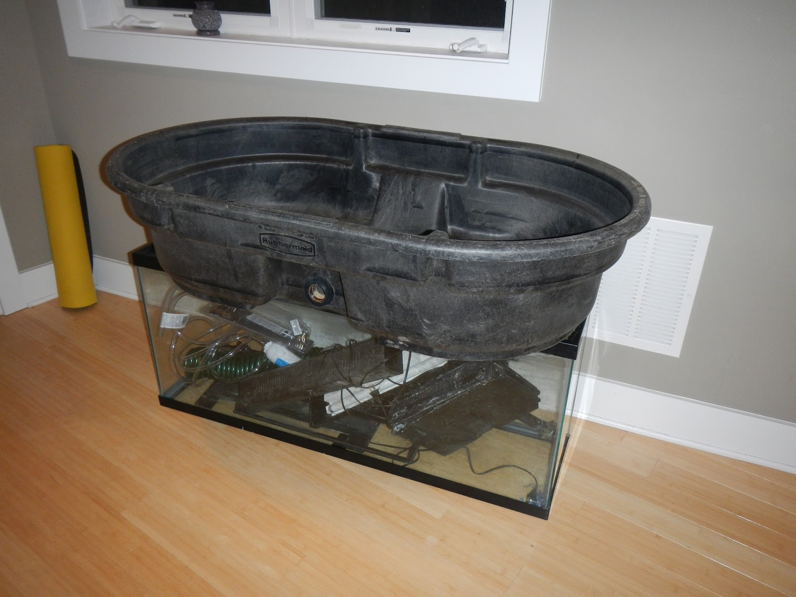 Heres Our 50 Gallon Stock Tank And 55 Aquarium