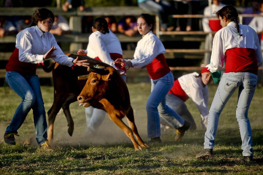 Wanita lawan lembu di Portugal
