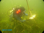 eelgrass monitoring