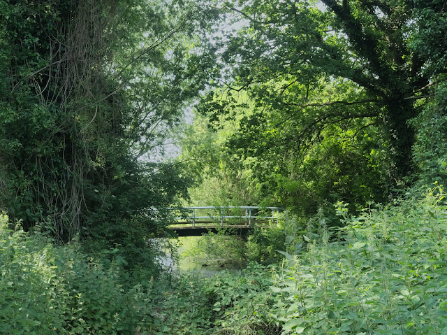 Bridge over spur of Dickerson's Pit surrounded by trees and vegetation