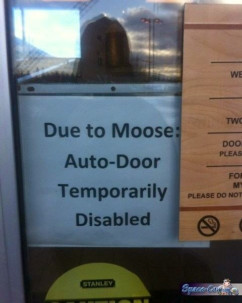funny moose sign picture