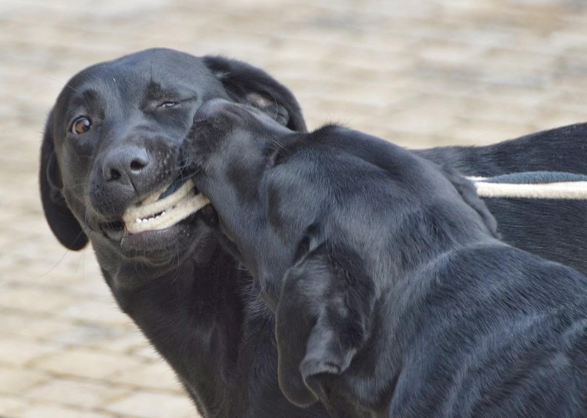 instappen tekenen hond