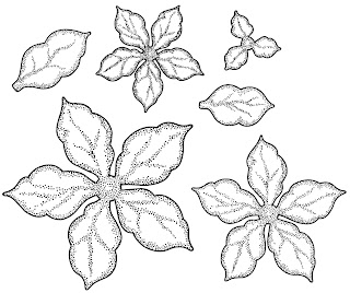 UMS634 SHADED POINSETTIA