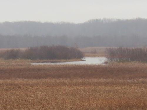 Pere Marquette River Flats