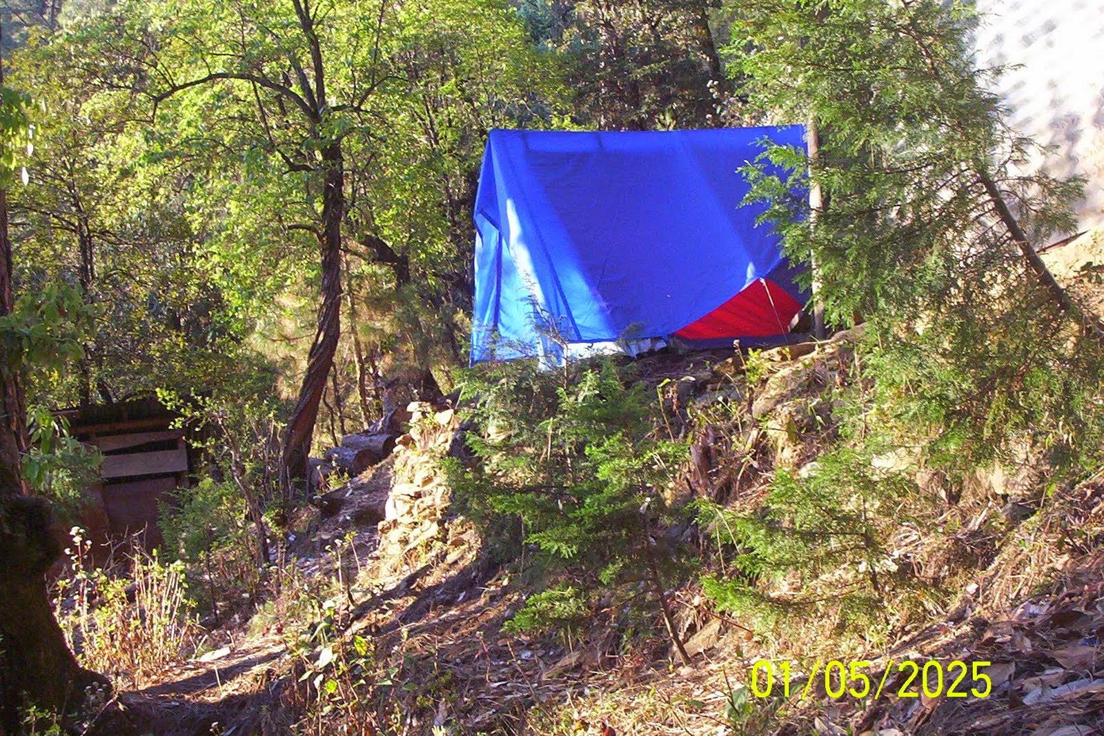 camping solo forest garhwal kumaon