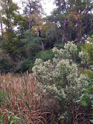 Mount Pleasant flora