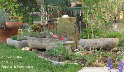 Annieinaustin, poppies w herb troughs