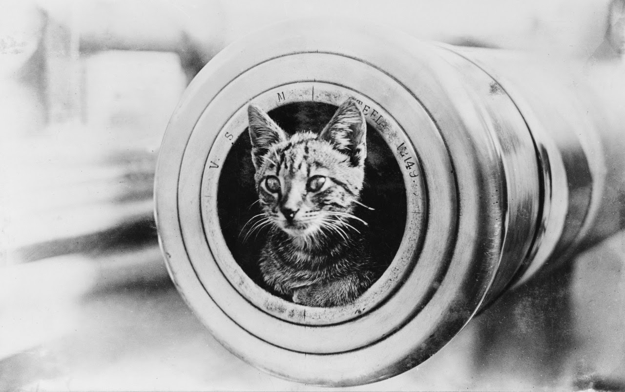 Cat in a cannon