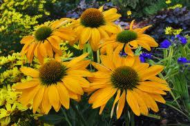 jardin et fleur: