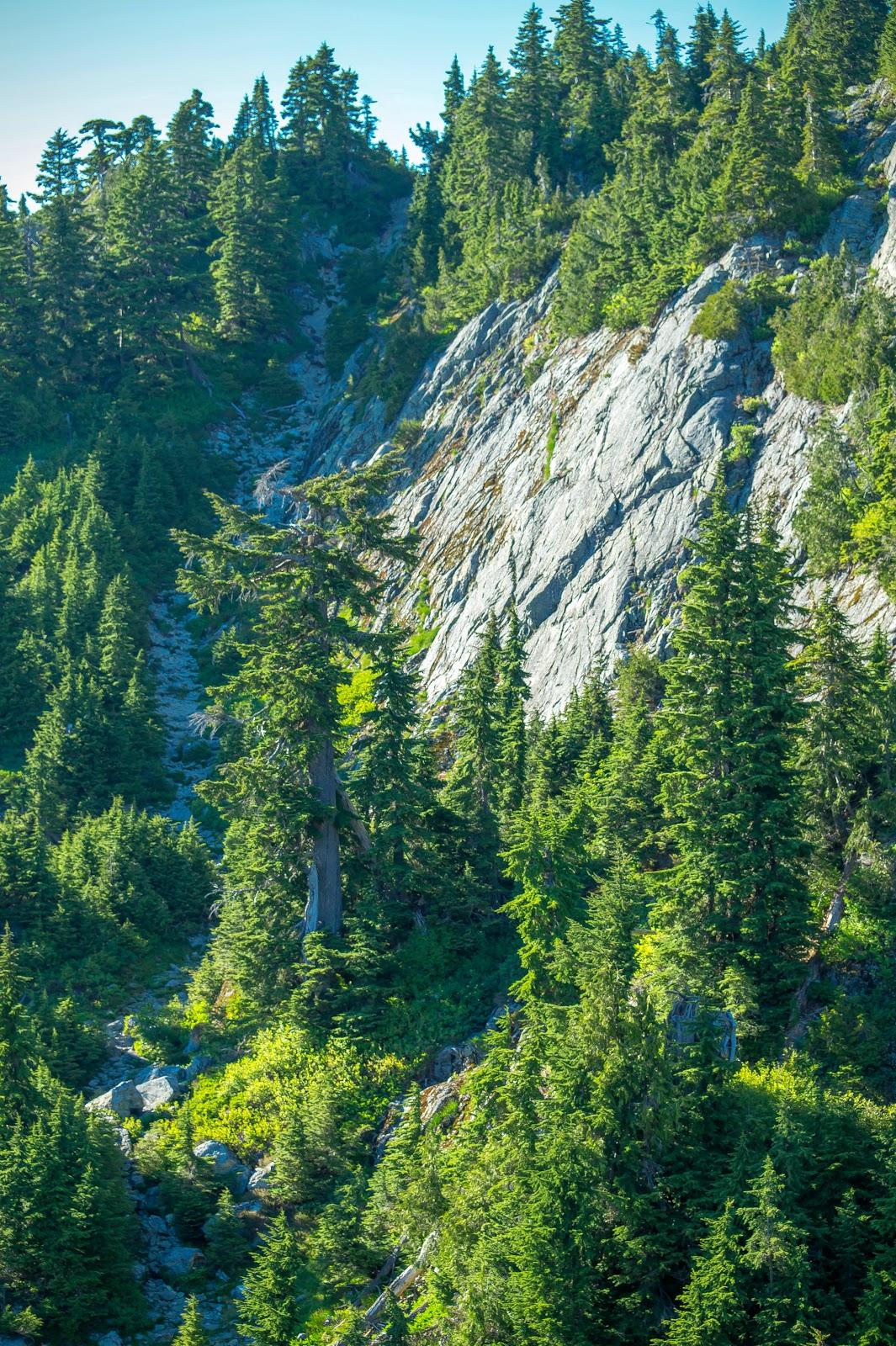 Слева в тени деревьев видна каменистая змейка. Это тропа - самый сложный участок пути