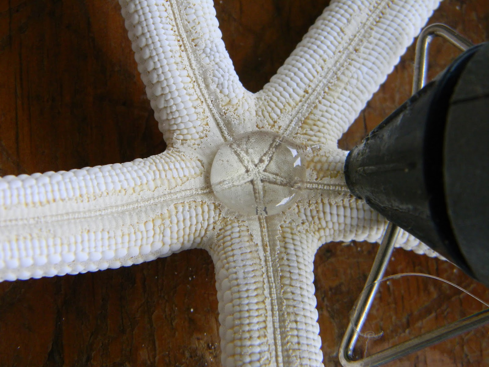 Artistic Endeavors 101 Star Fish Napkin Ring For A Beach