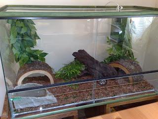 Mondo dei rettili istruzioni per come deve essere un for Terracquario per tartarughe