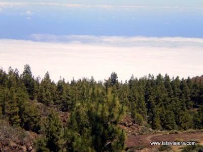 Mar Nubes Corona Forestal Teide, Tenerife