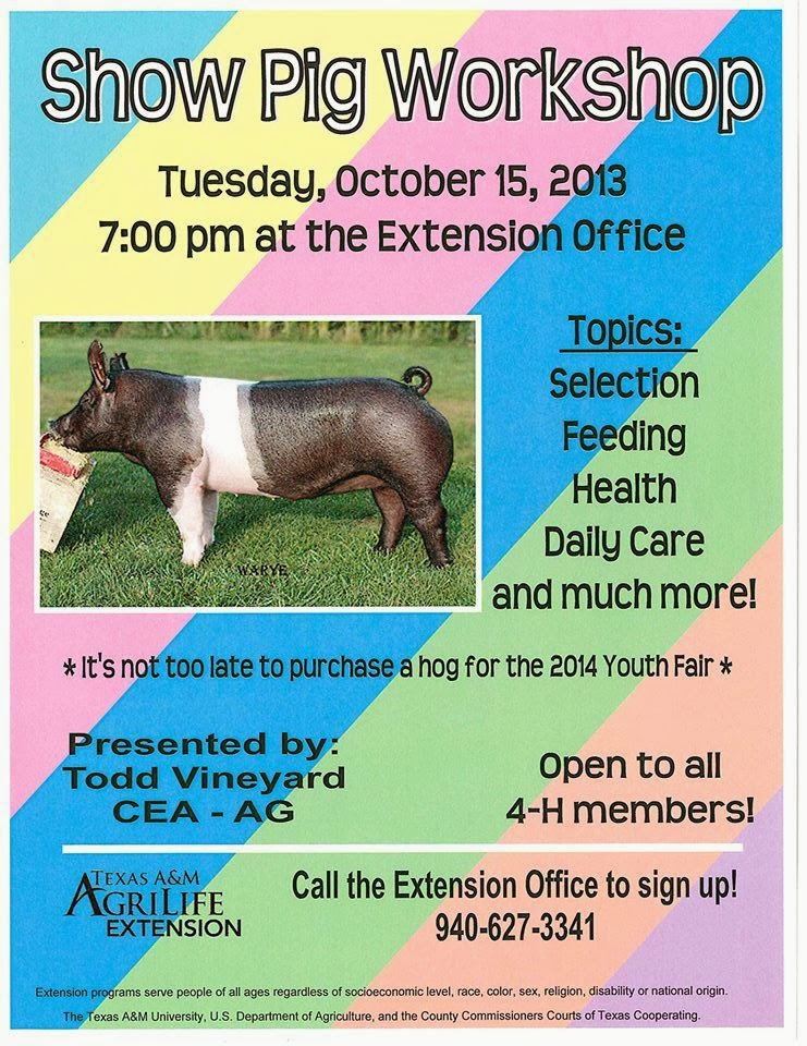 Show Pigs in Texas Want to Show Pigs Learn More About it