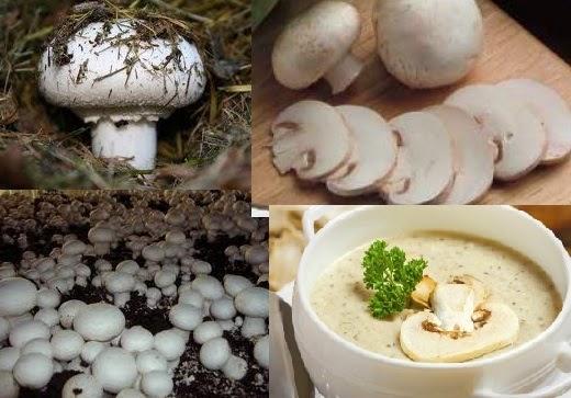 El mejor medio del hongo en los pies en la forma puesta en marcha