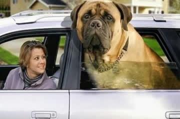 cachorro-grande