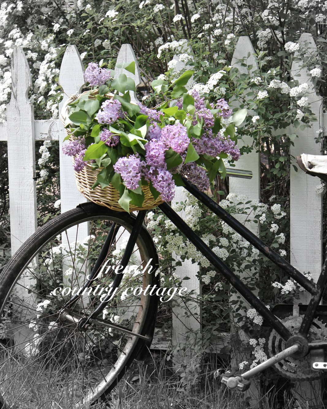 A bouquet of lilacs french country cottage a bouquet of lilacs mightylinksfo