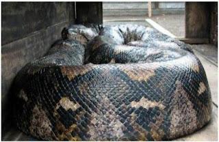 World's Biggest Snake Ever