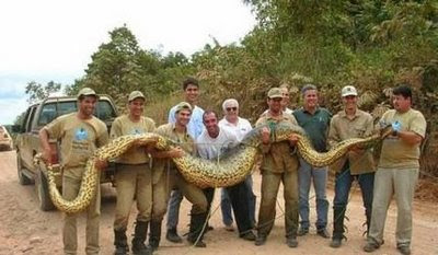 The World Biggest Snakes
