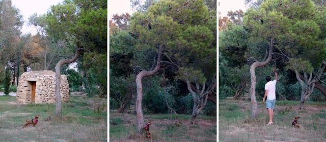 picnic in kennedy grove st paul's bay malta pinecones dog