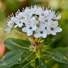 U.P. Wildflowers