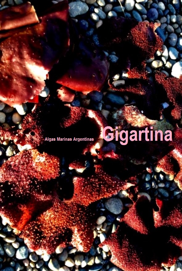 Gigartina