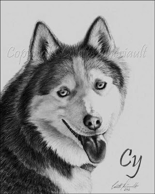 Siberian Husky Pet Portrait Drawing in Pencil by Award Winning Animal Artist Colette Theriault
