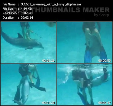 25.05.11 / ВИДЕО: Swiming with Frisky Dolphin (5 MB)